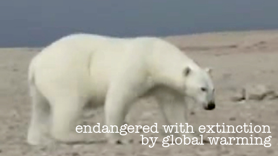 an analysis of the polar bears in the endangered species act Polar bear tom mangelsen a symbol of the arctic what's happening now: although polar bears received endangered species act protection in 2008.